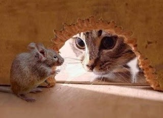 Cara Ampuh Mengusir Tikus