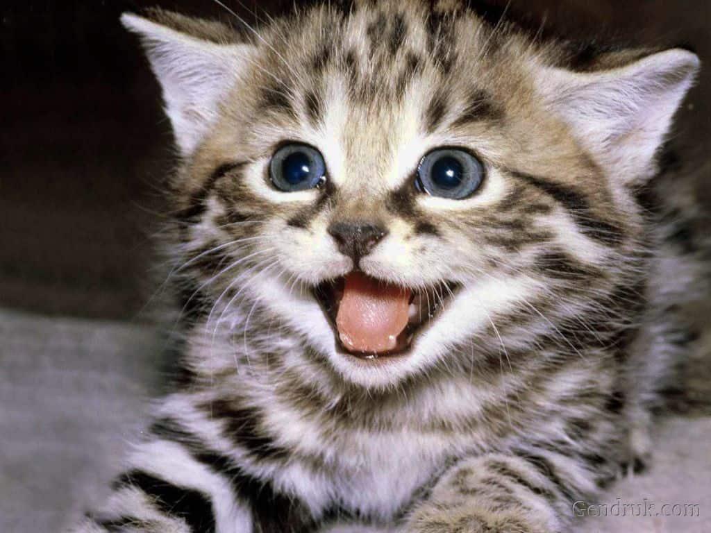 Mengenal Penyakit Psikologis Kucing dan Cara Penanganannya