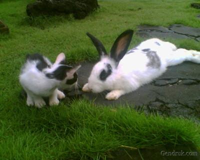 kelinci lucu